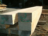 Macrocarpa Beams